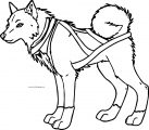 balto dog coloring page (12)