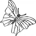 Butterfly Coloring Page 03