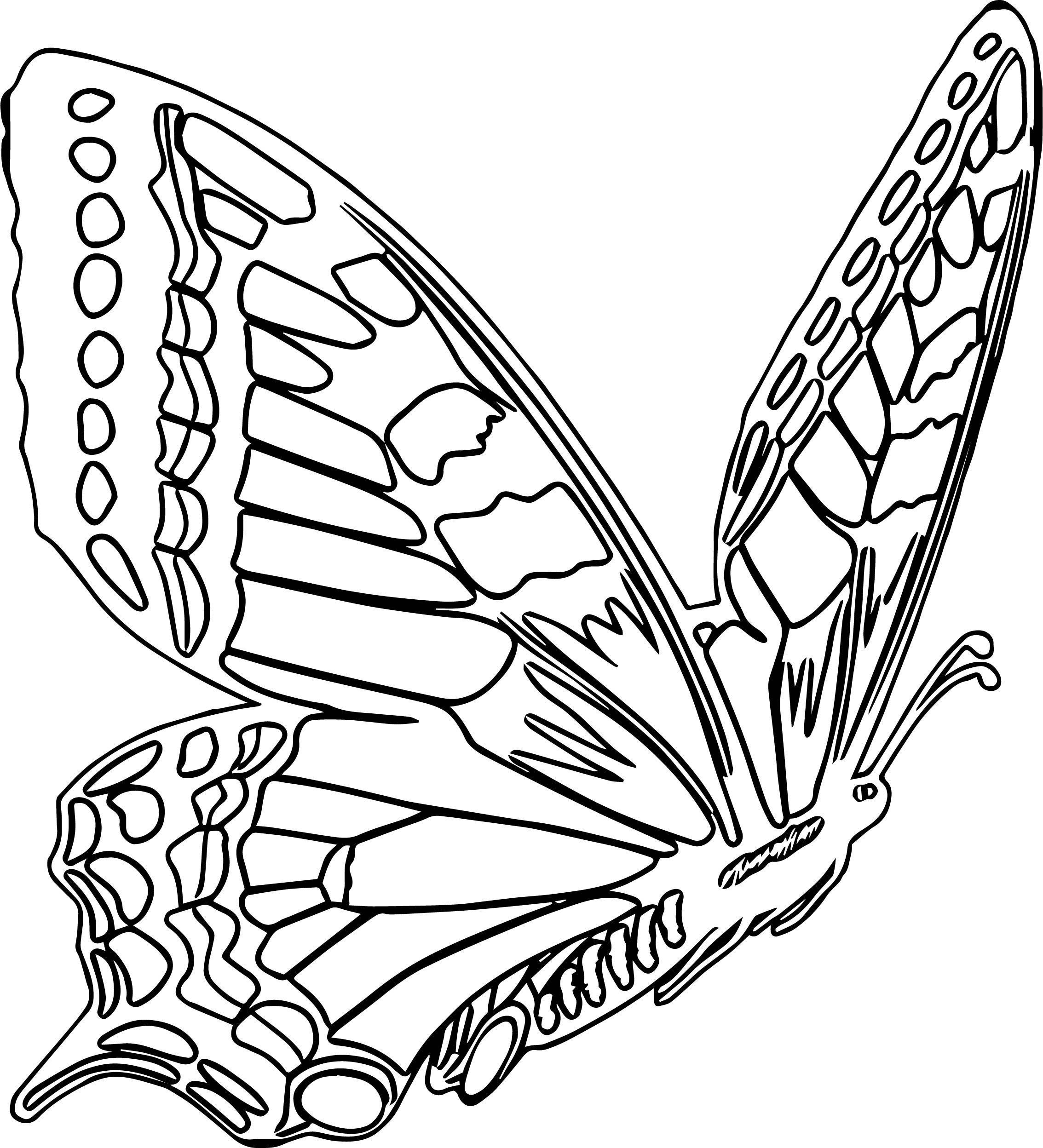 Butterfly Coloring Page 06