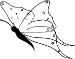 Butterfly Coloring Page 07