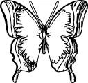 Butterfly Coloring Page 08