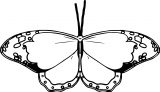 Butterfly Coloring Page 11