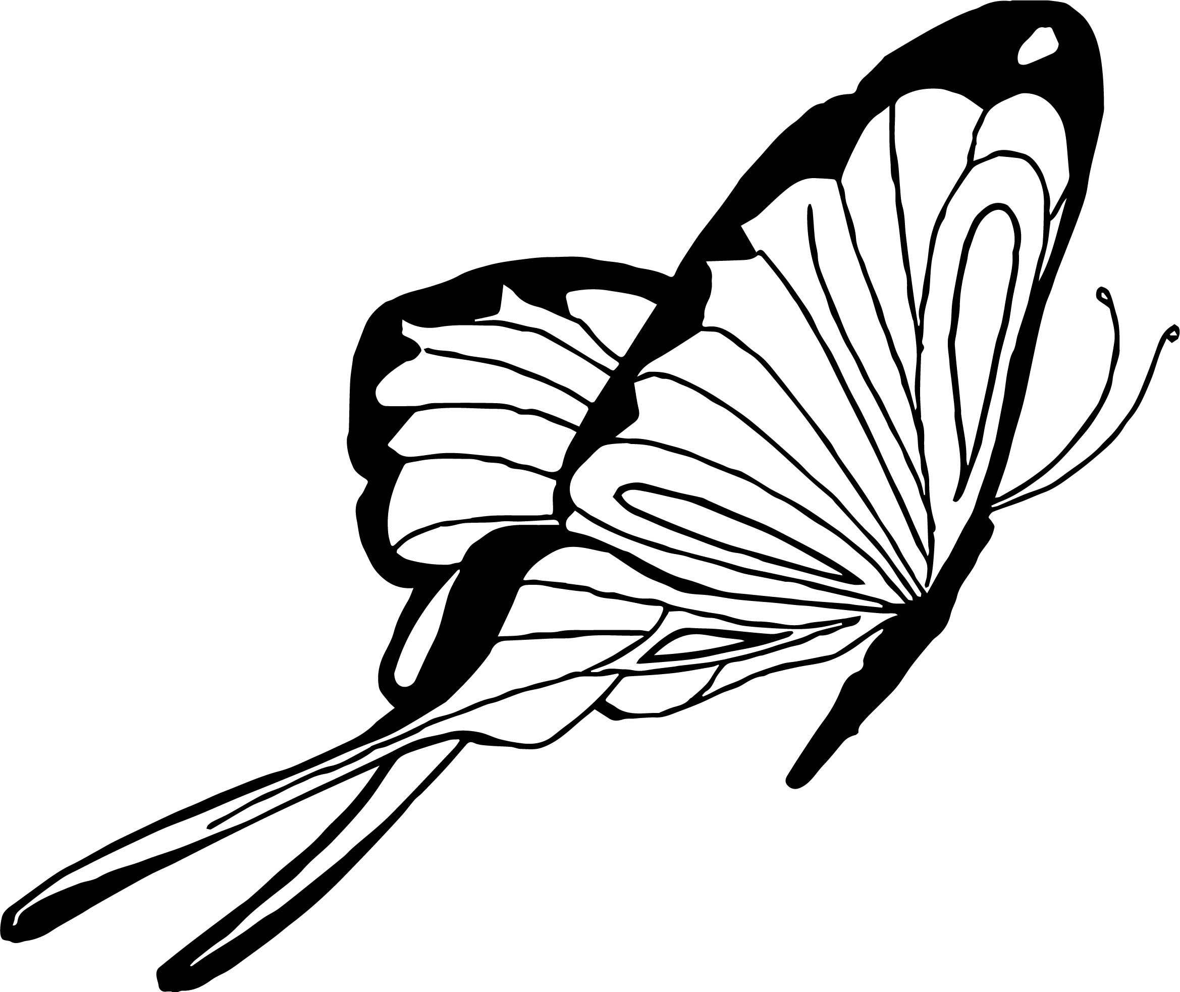 Butterfly Coloring Page 16