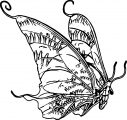 Butterfly Coloring Page 25