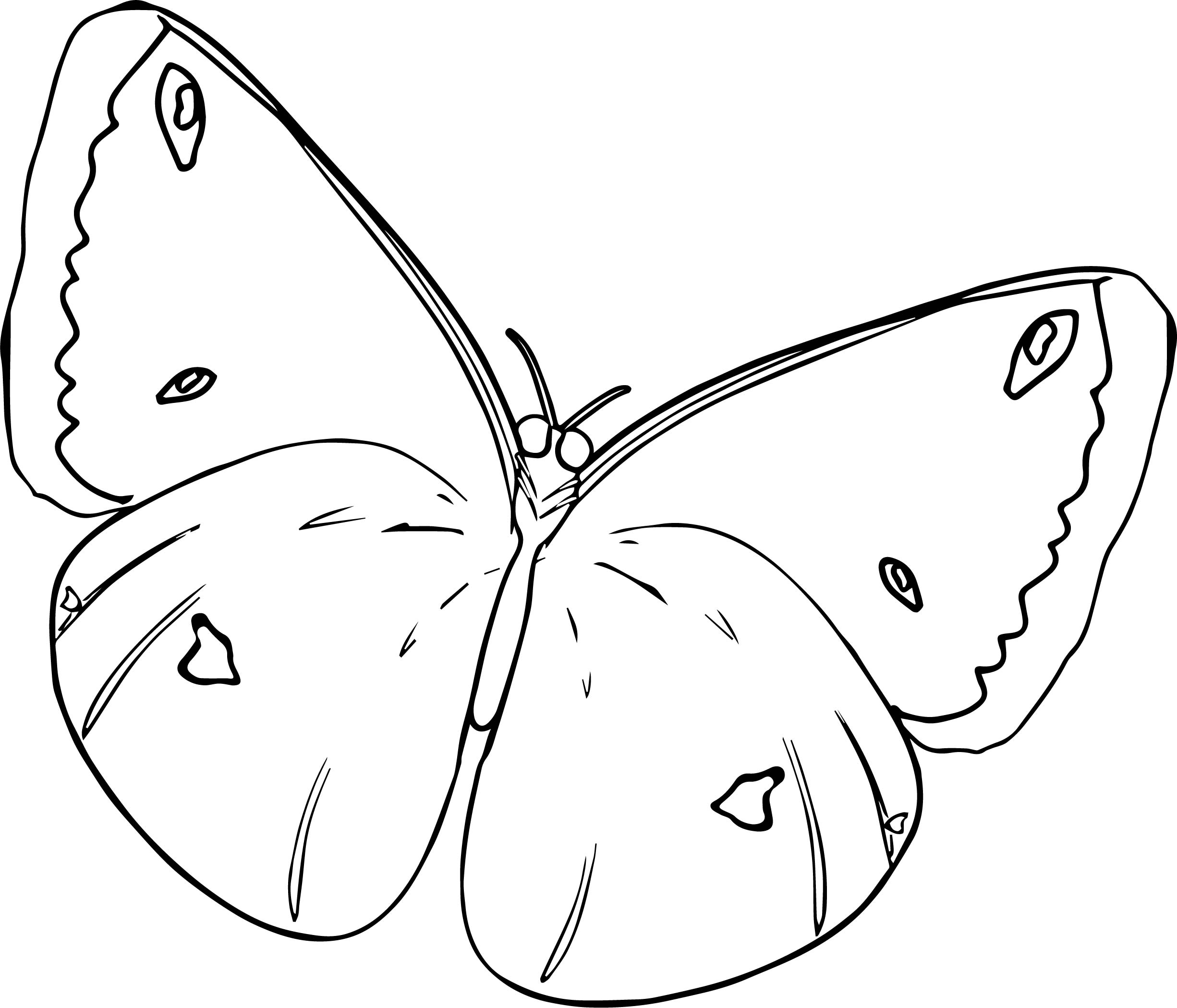 Butterfly Coloring Page 26
