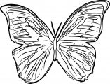 Butterfly Coloring Page 27