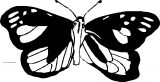 Butterfly Coloring Page 40