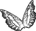 Butterfly Coloring Page 51