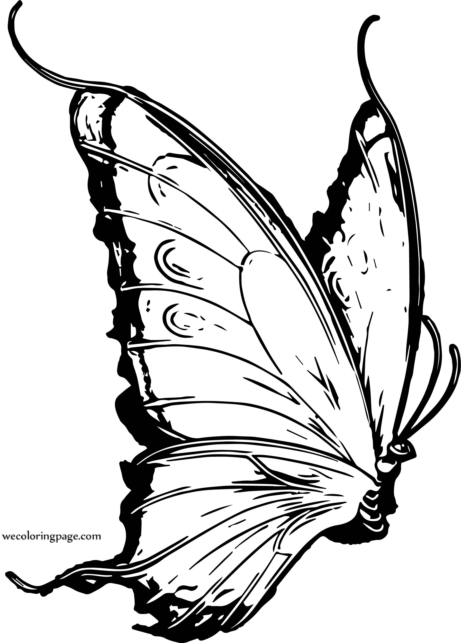Butterfly Coloring Page 52
