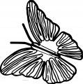 Butterfly Coloring Page 57