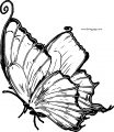 Butterfly Coloring Page 58