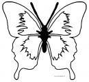 Butterfly Md Coloring Page