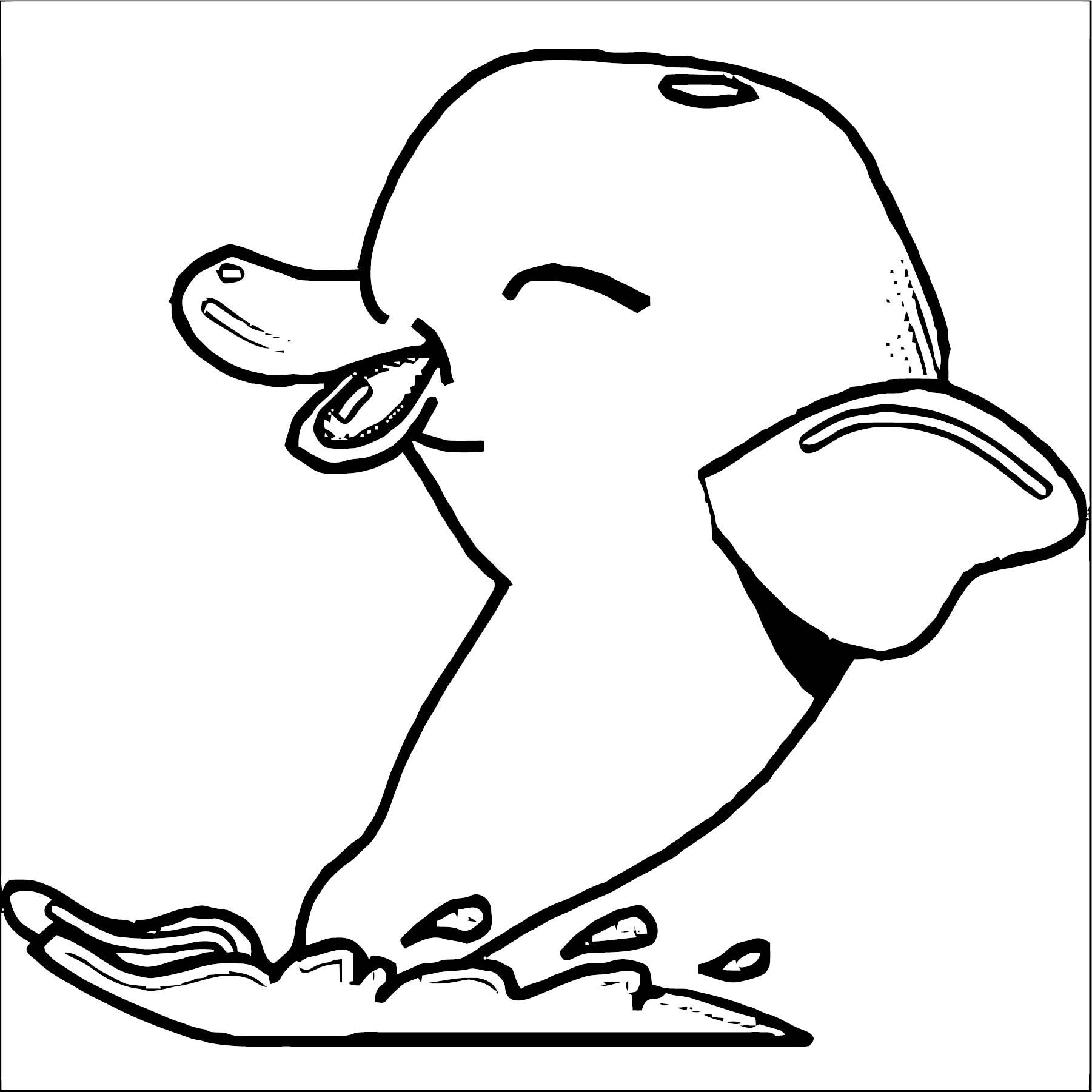 Dolphin Coloring Page 053