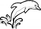Dolphin Coloring Page 166