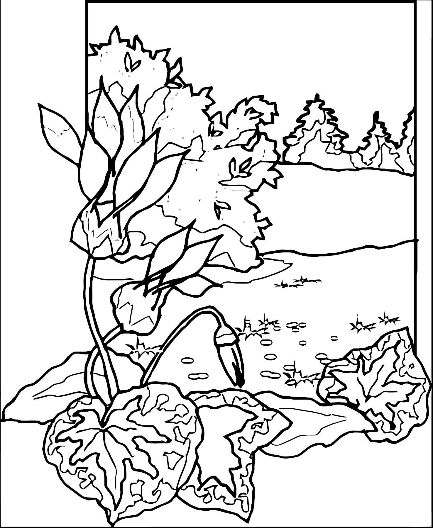 Art Momnatur Landscape Coloring Page 5