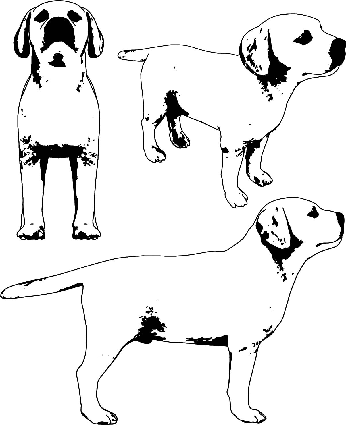 Dog V1 Coloring Page