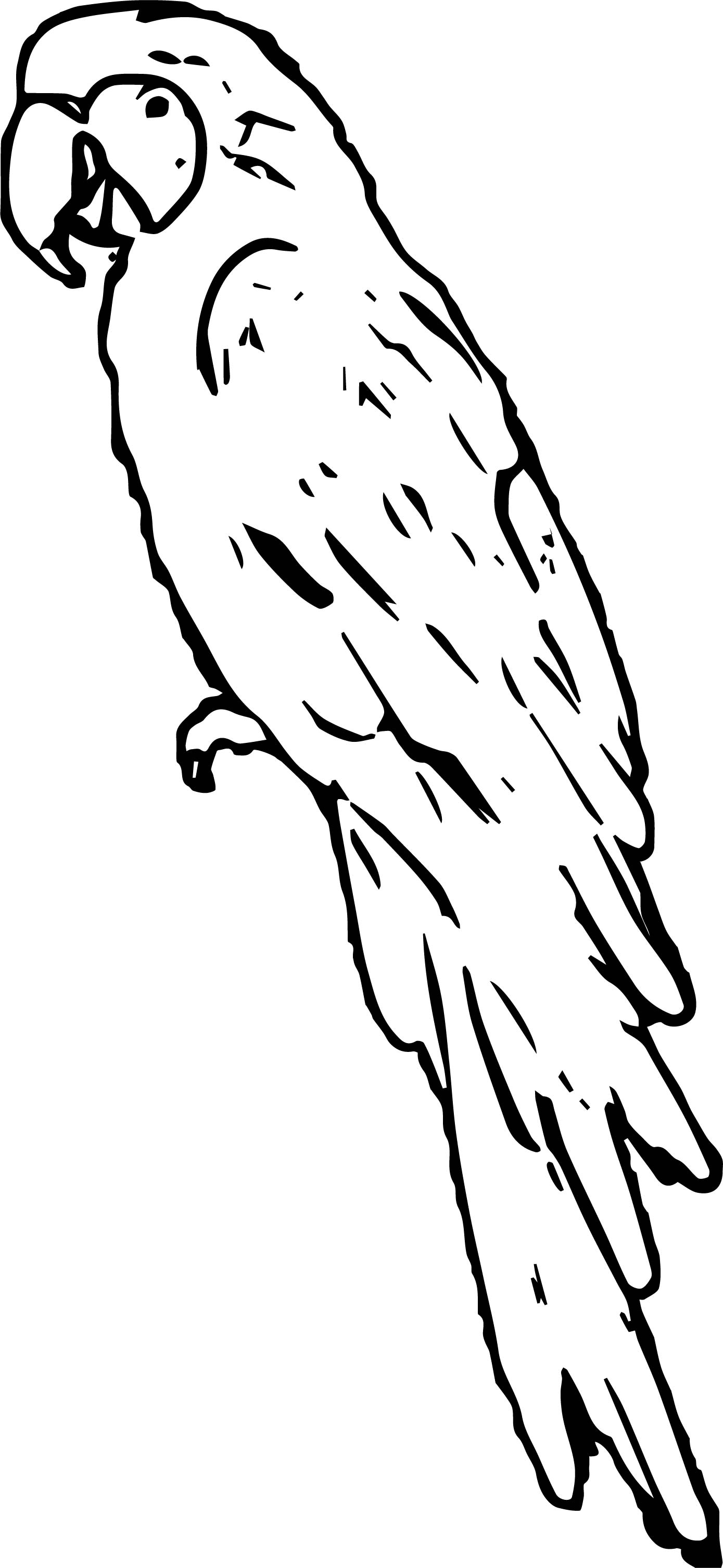 Parrot Coloring Page 013