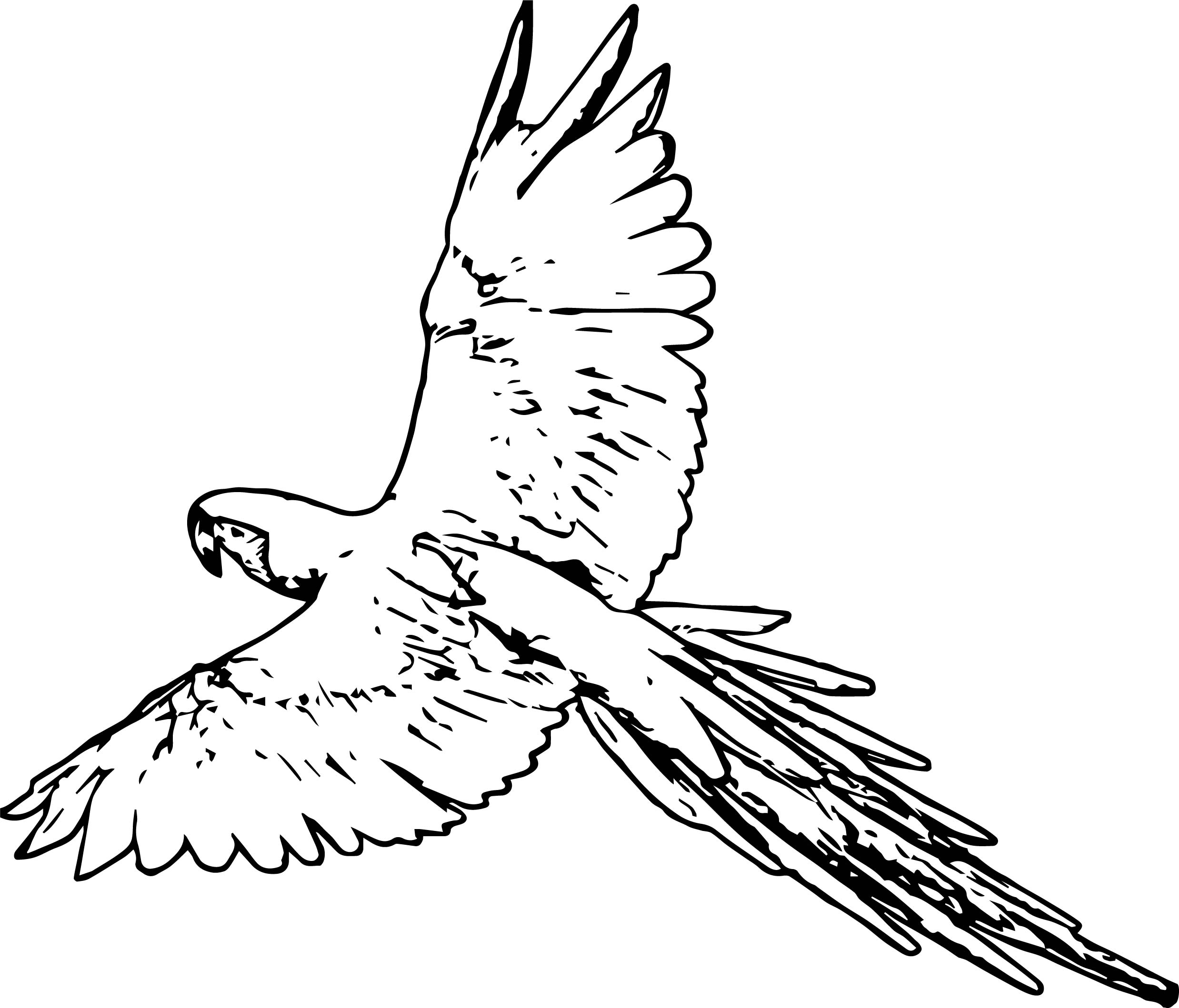 Parrot Coloring Page 016
