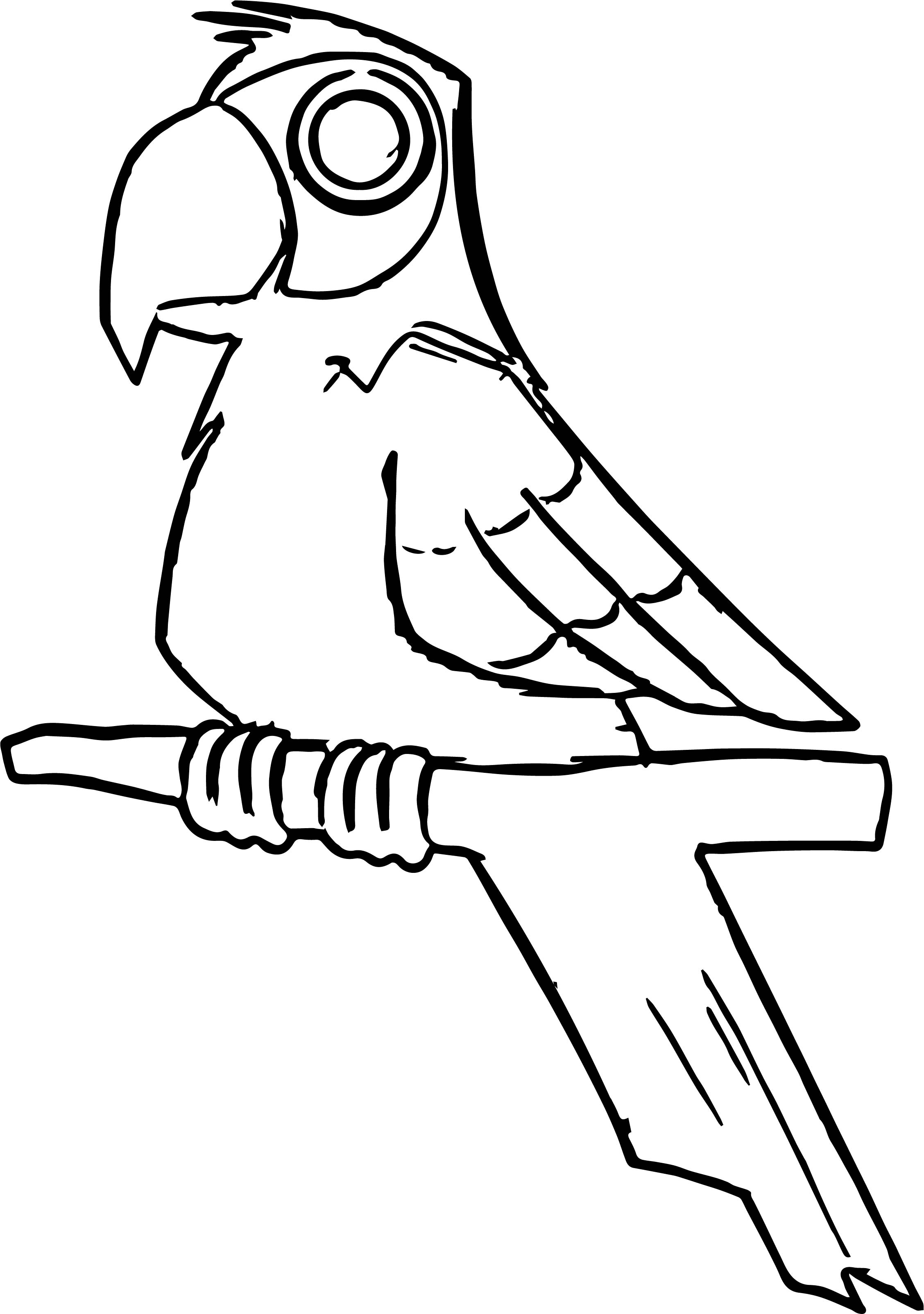 Parrot Coloring Page 018