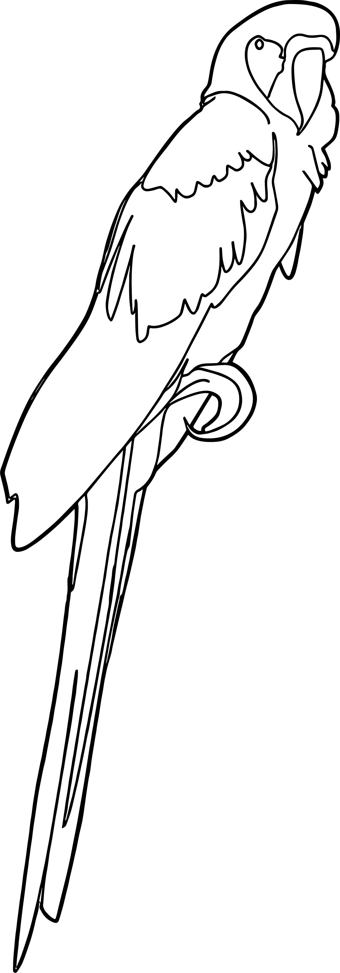 Parrot Coloring Page 030