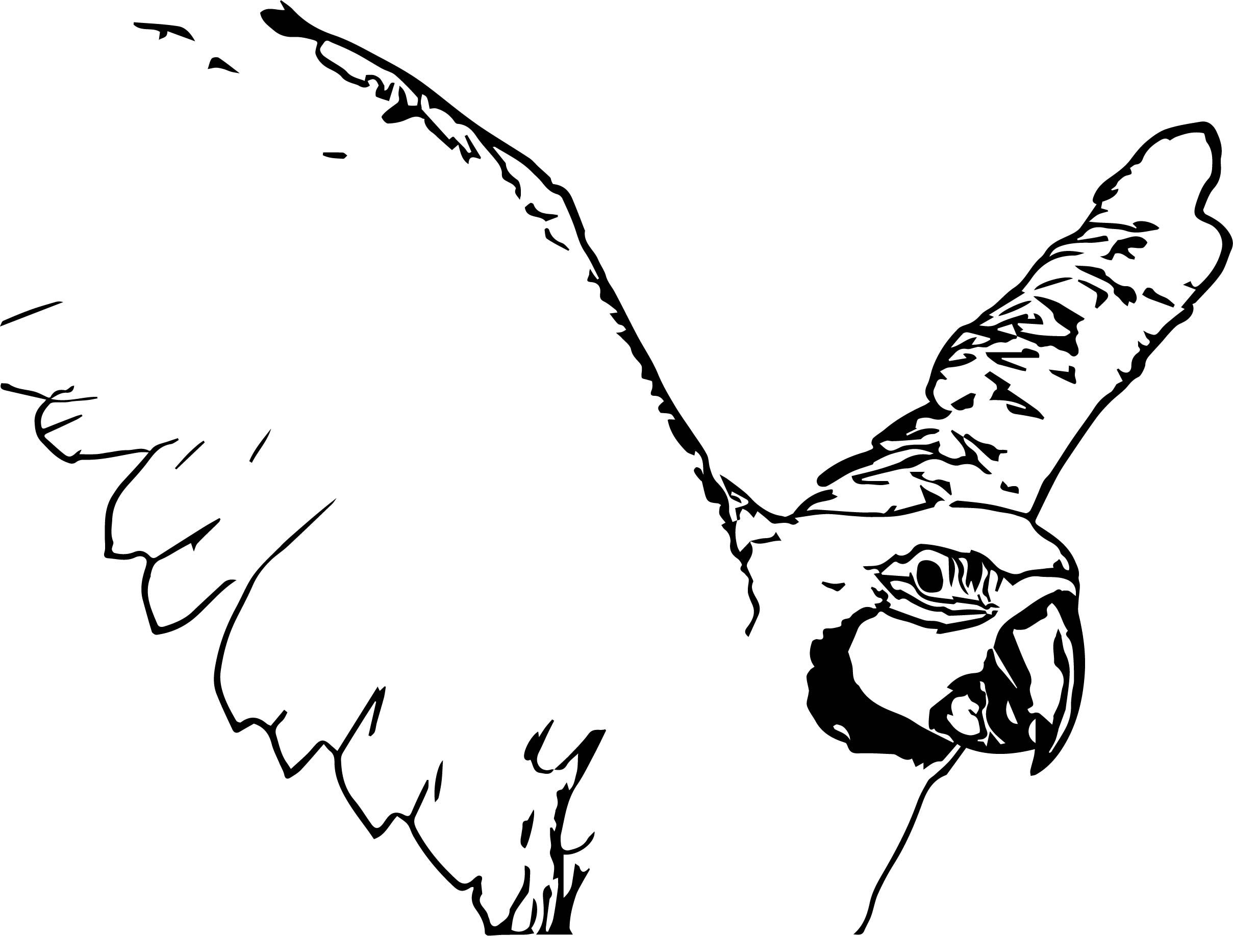 Parrot Coloring Page 036