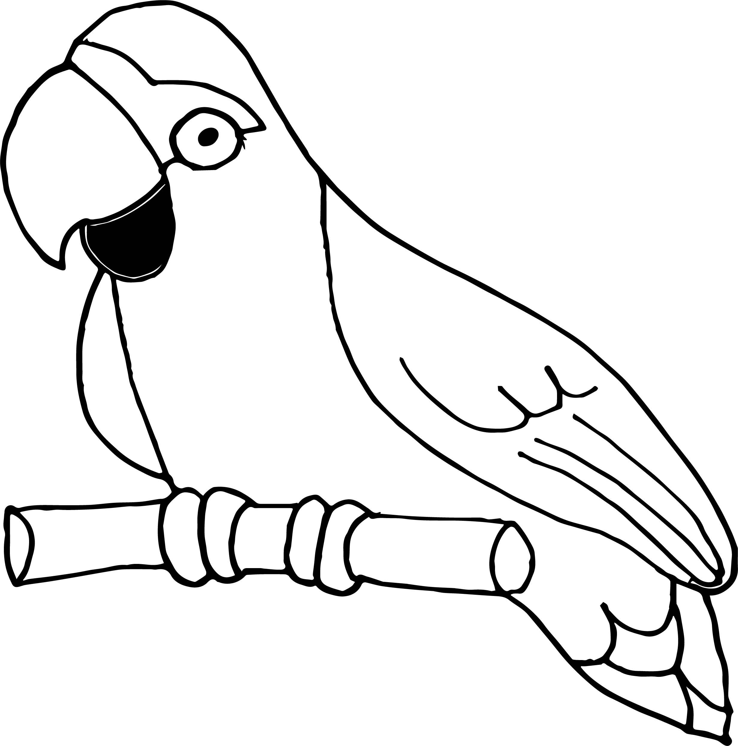 Parrot Coloring Page 040