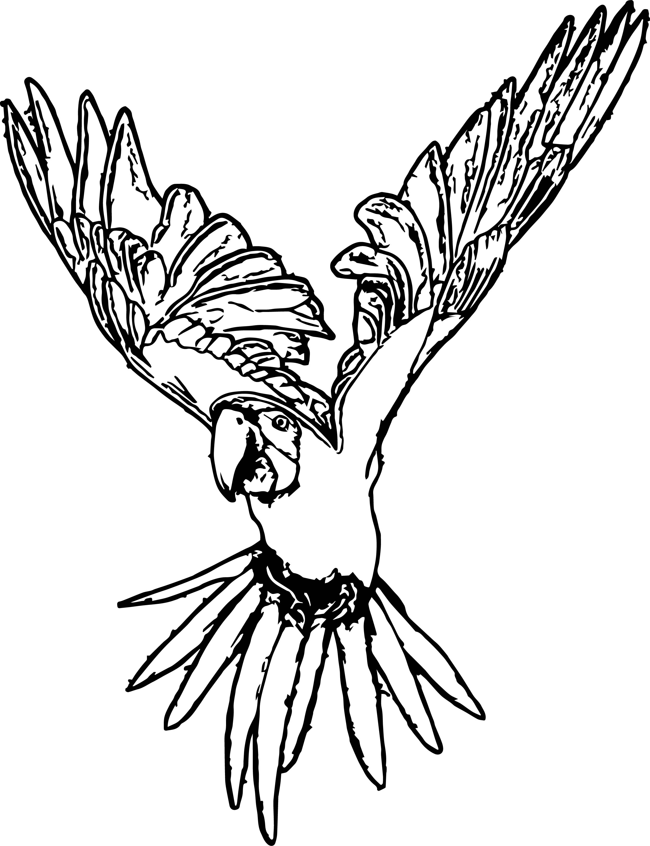 Parrot Coloring Page 041
