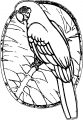 Parrot Coloring Page 051