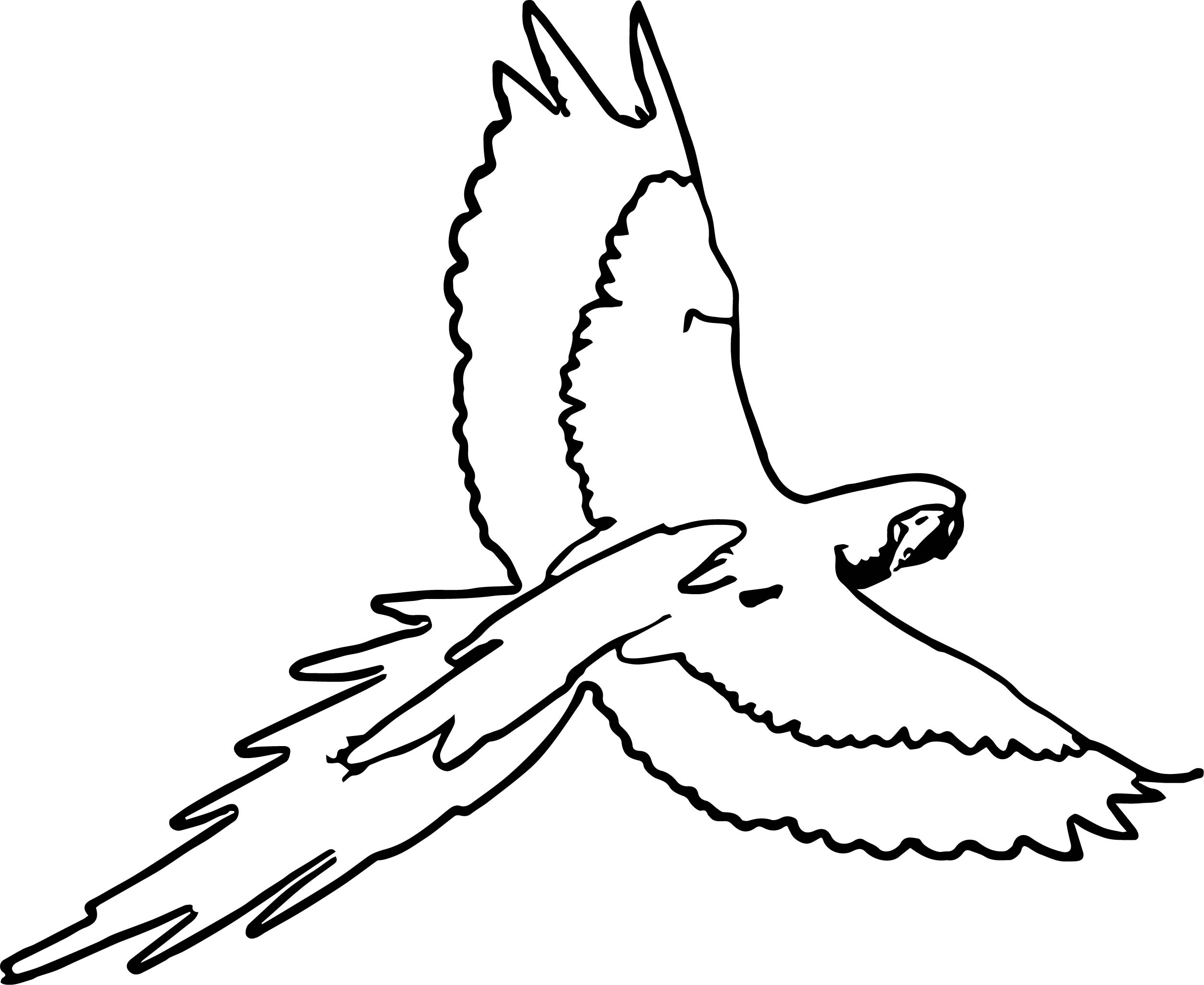 Parrot Coloring Page 066