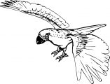 Parrot Coloring Page 069