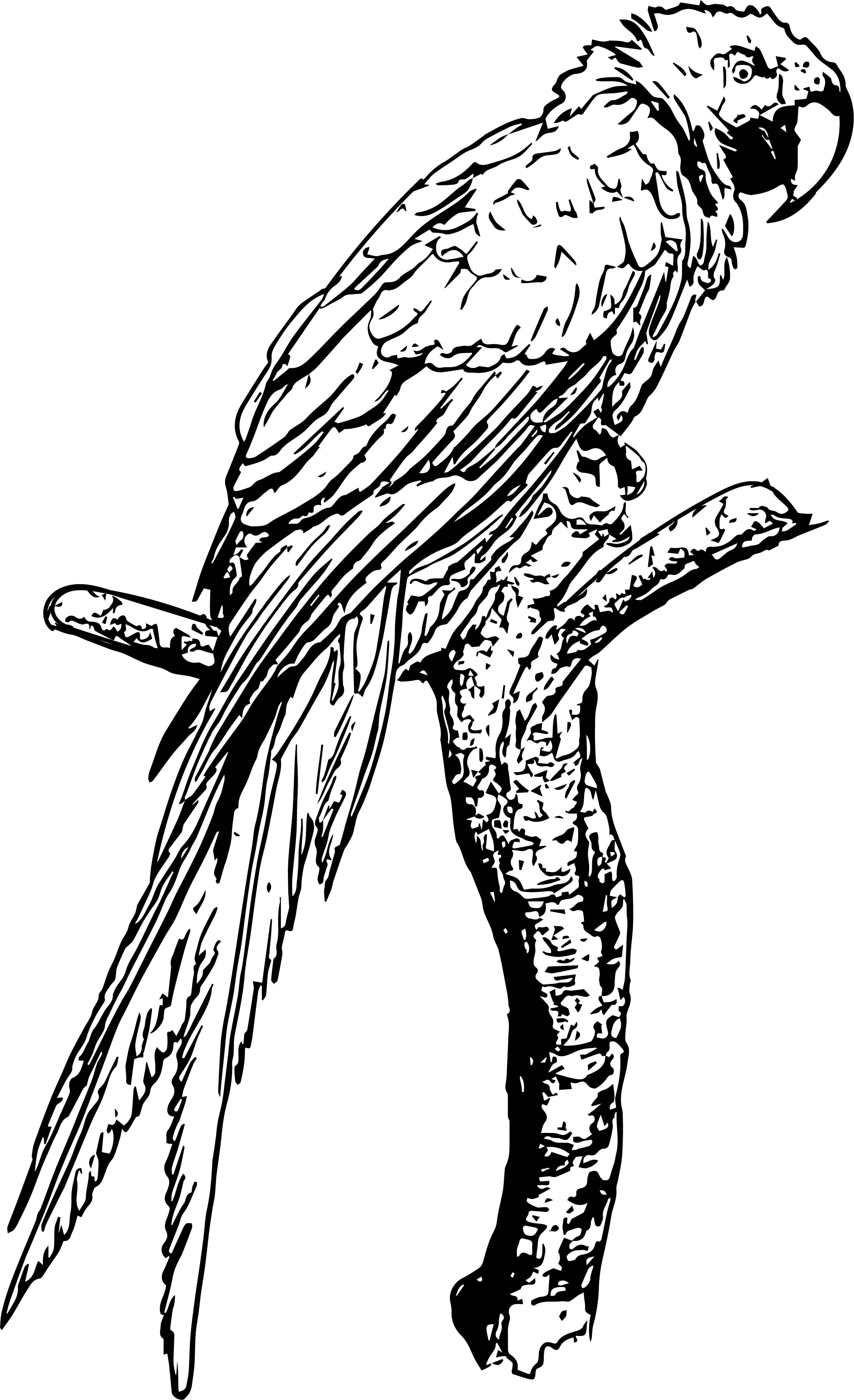 Parrot Coloring Page 072