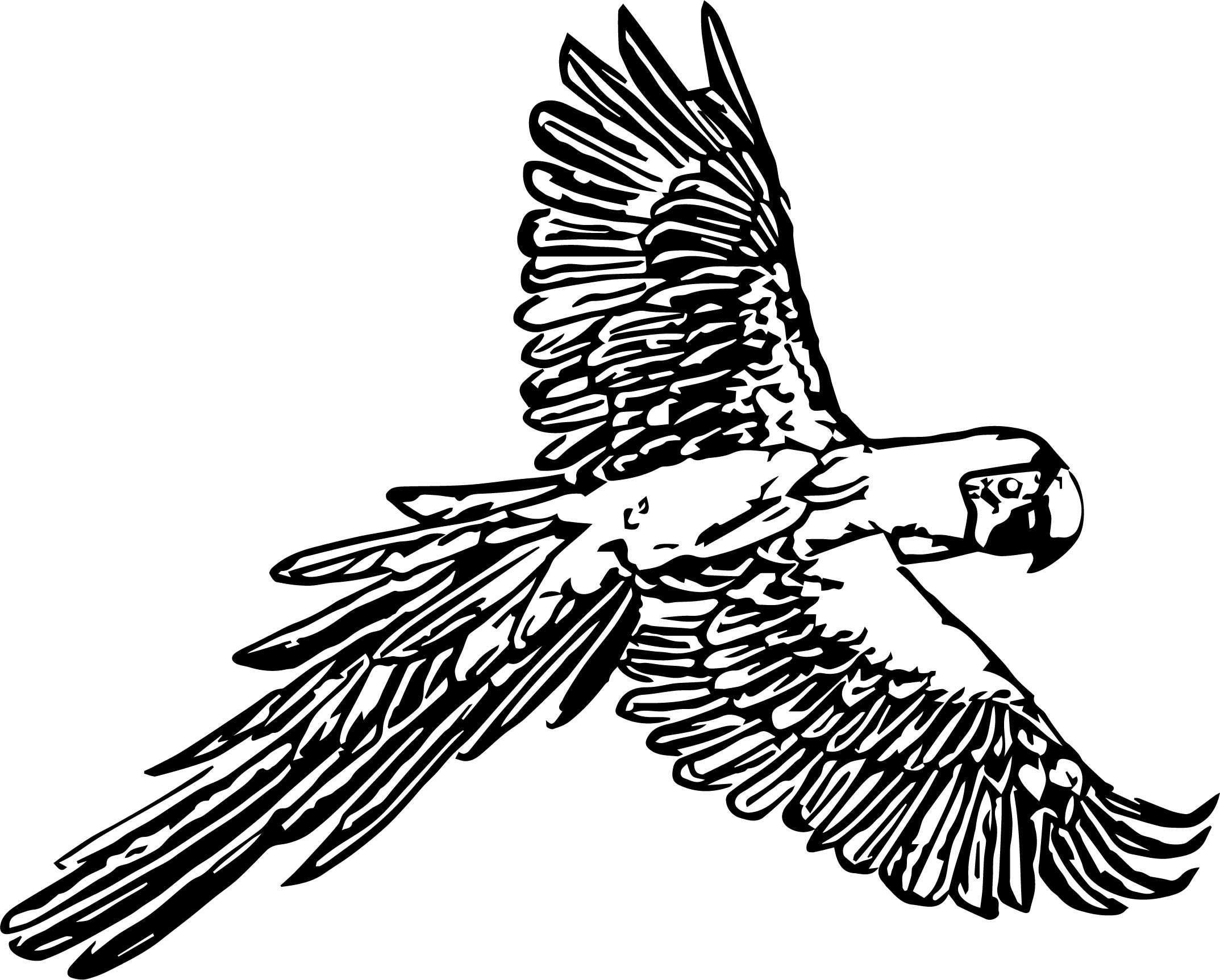 Parrot Coloring Page 073