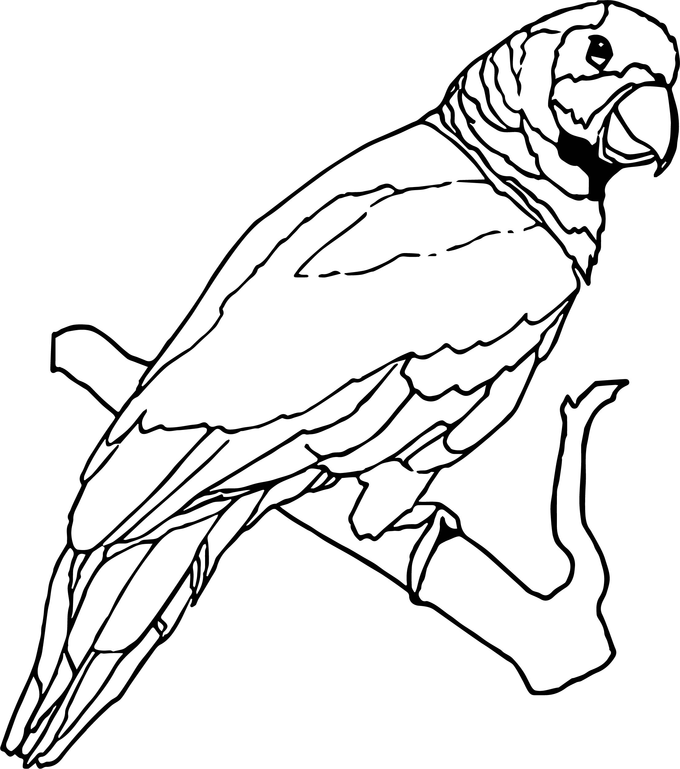 Parrot Coloring Page 080
