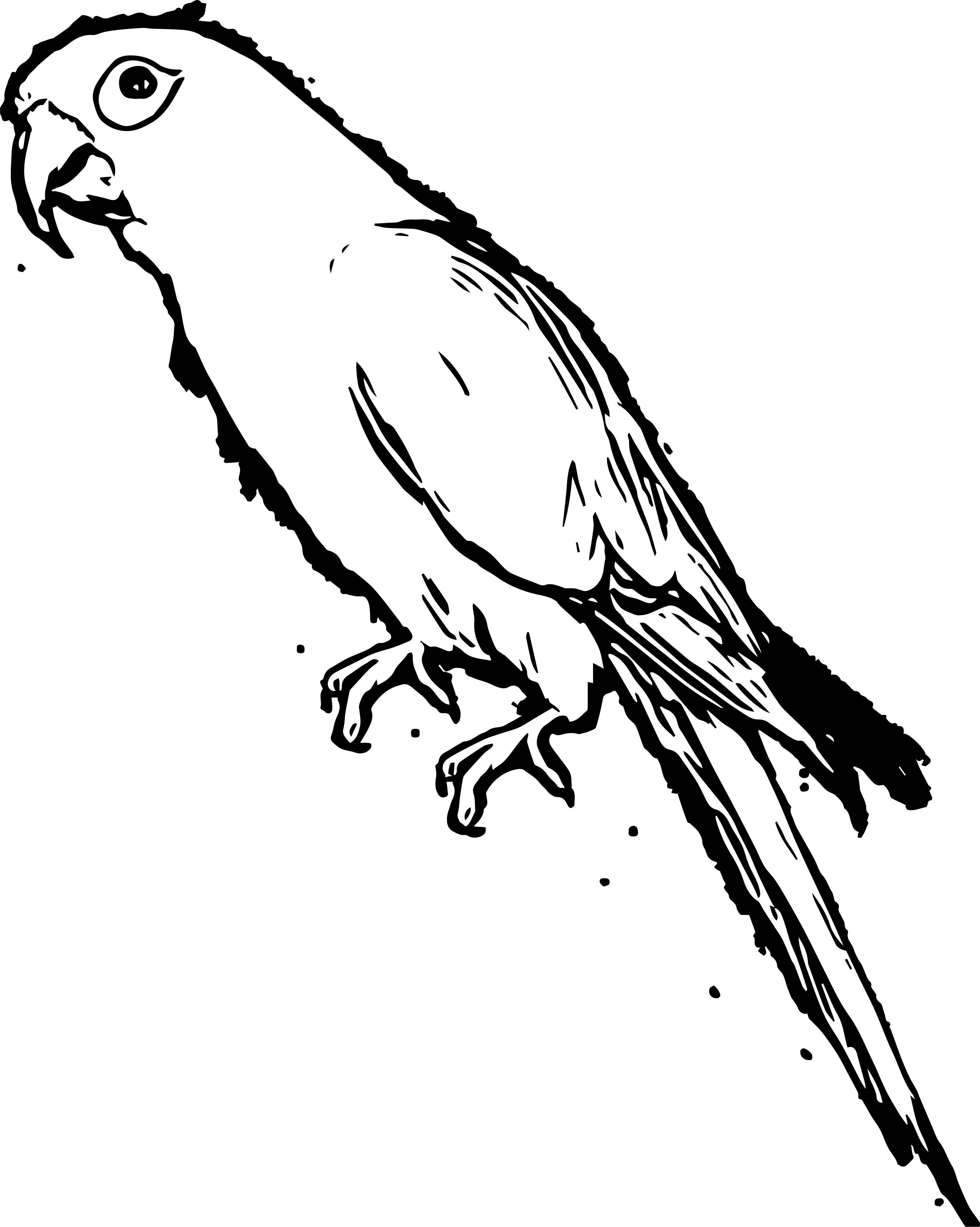 Parrot Coloring Page 083