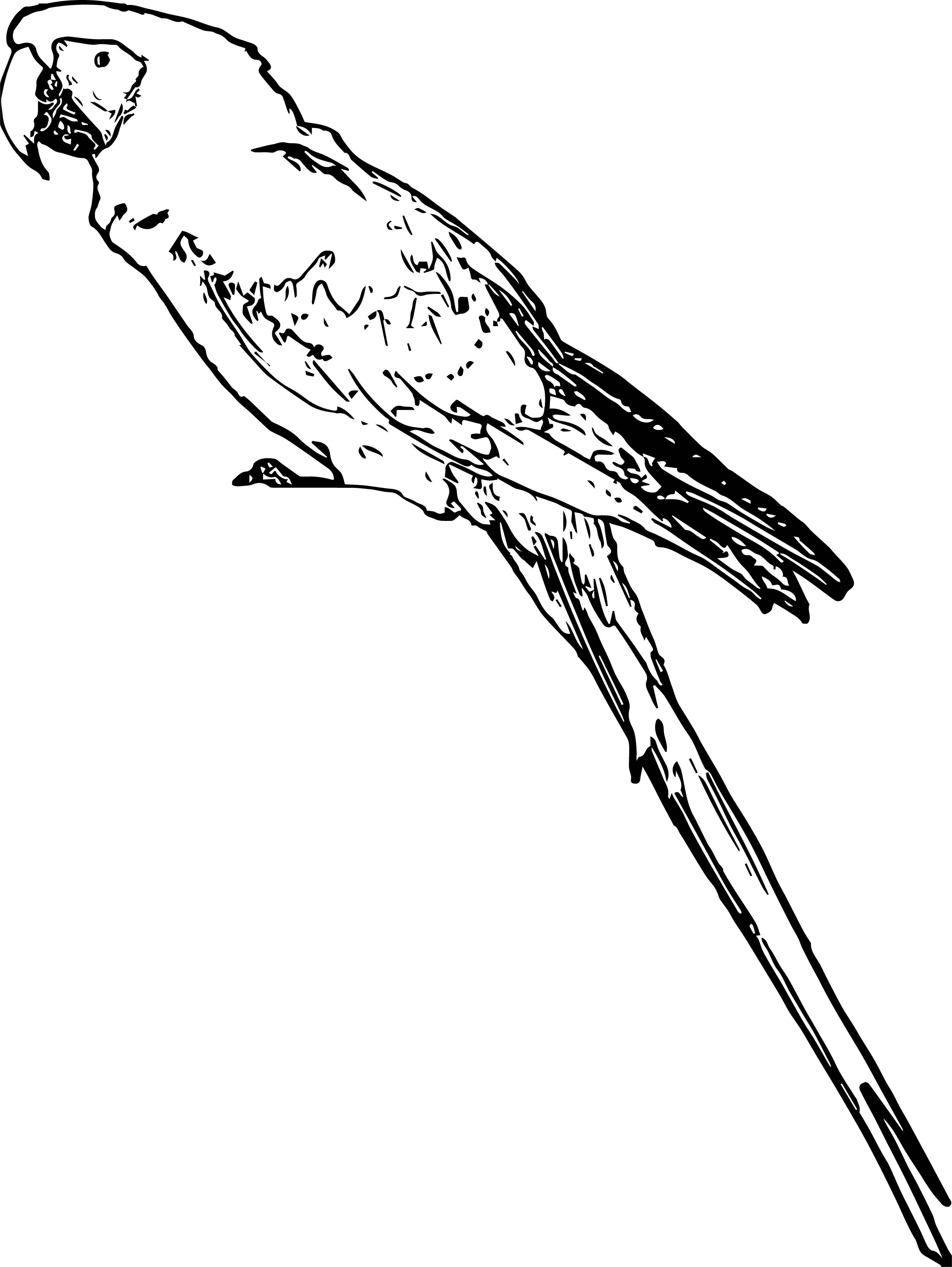Parrot Coloring Page 085