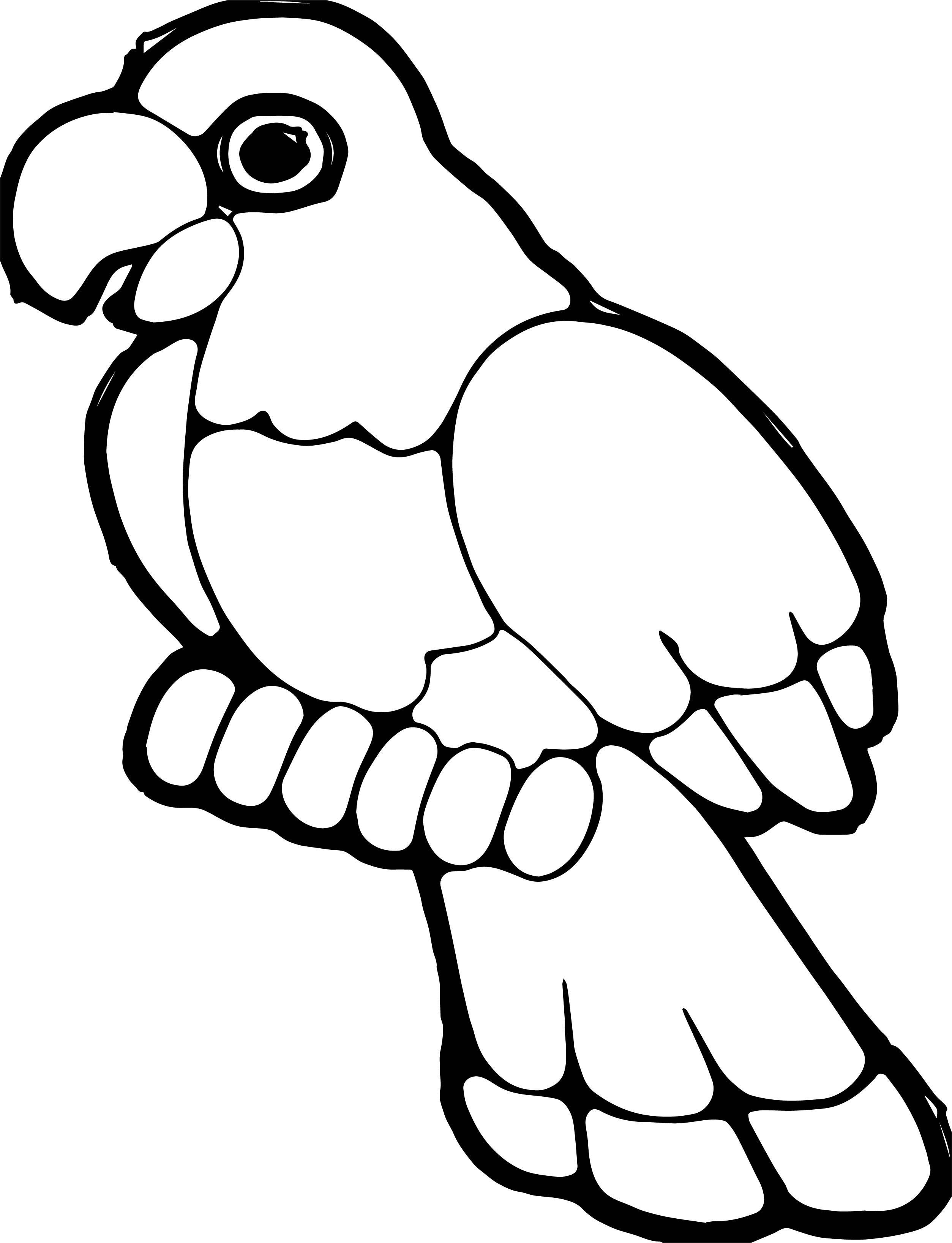 Parrot Coloring Page 090
