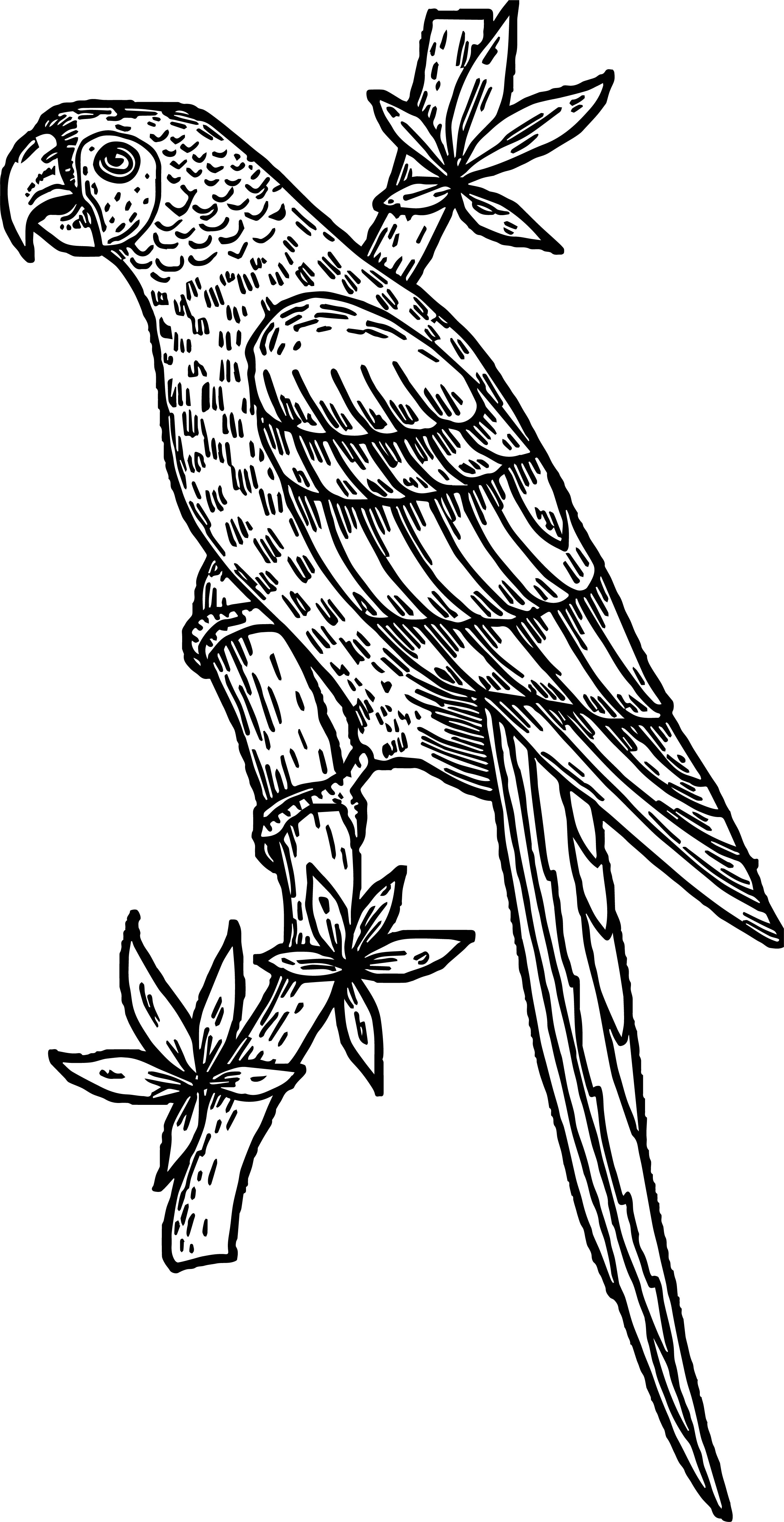 Parrot Coloring Page 099