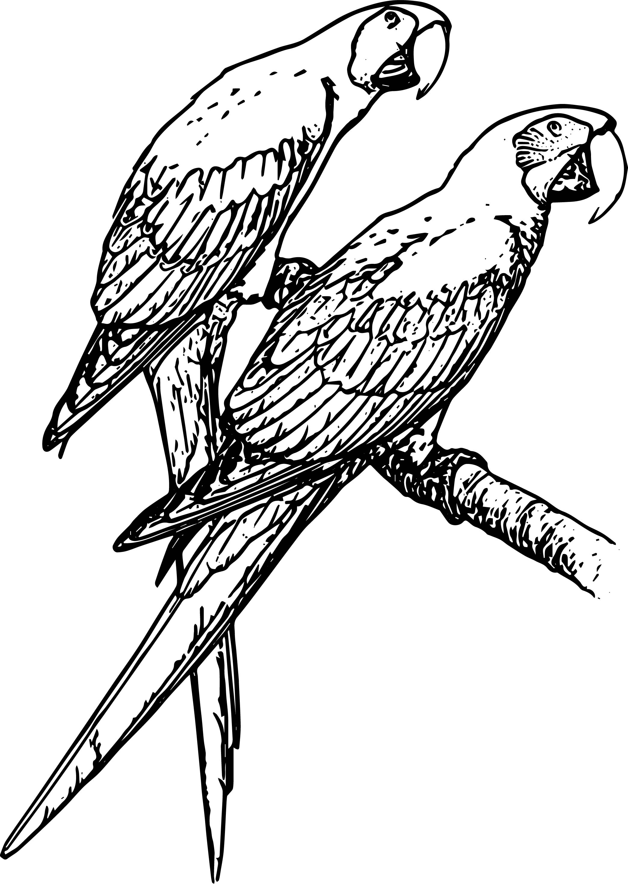 Parrot Coloring Page 103
