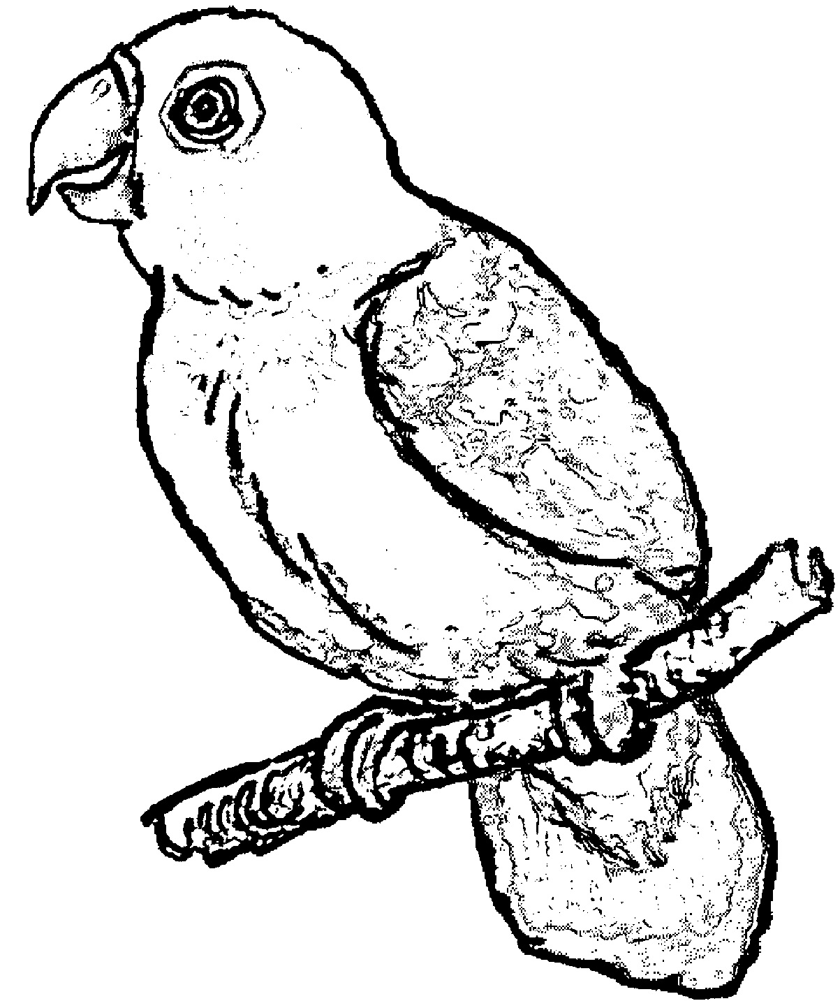 Parrot Coloring Page 106