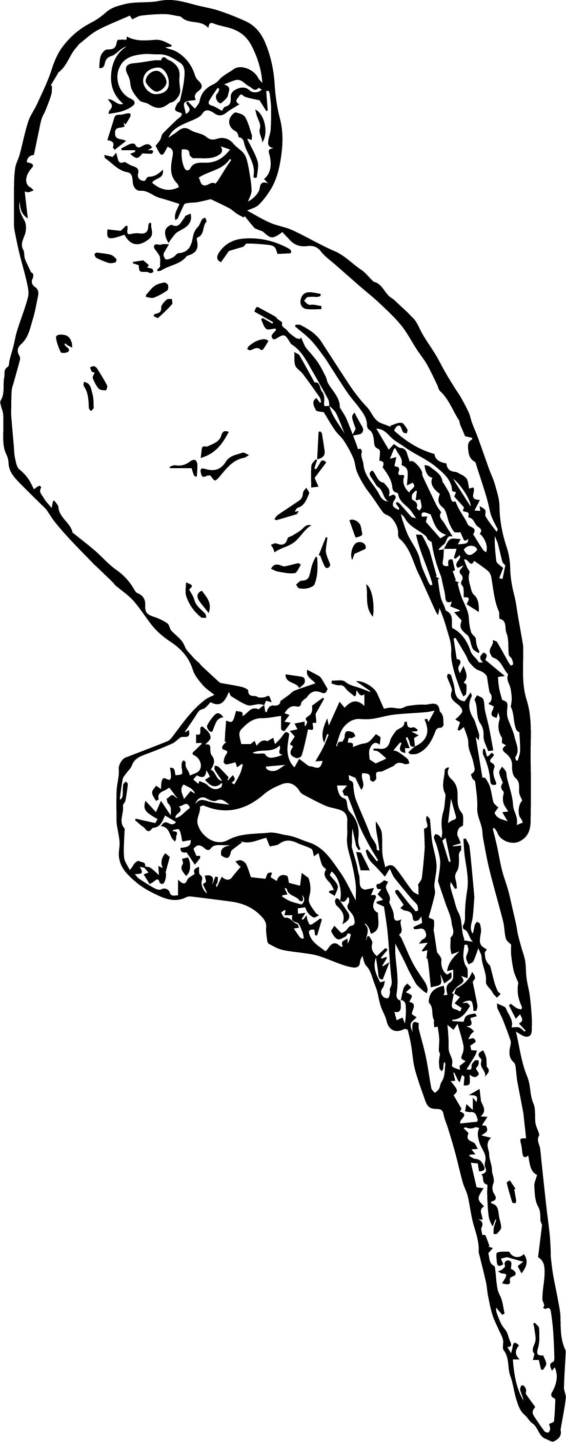 Parrot Coloring Page 123
