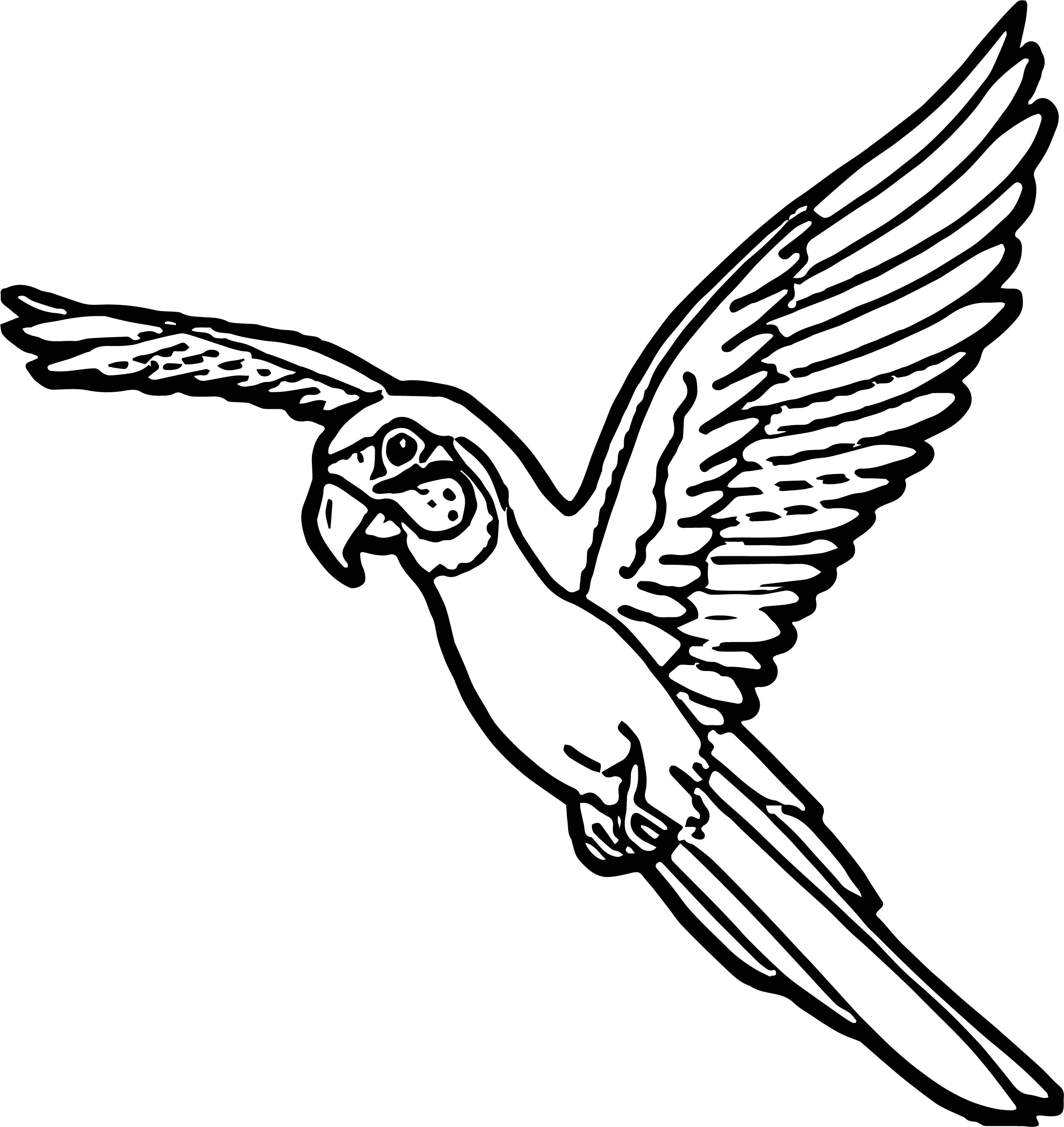 Parrot Coloring Page 128