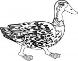 Duck Coloring Page WeColoringPage 032