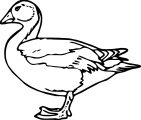 Duck Coloring Page WeColoringPage 066