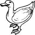 Duck Coloring Page WeColoringPage 078