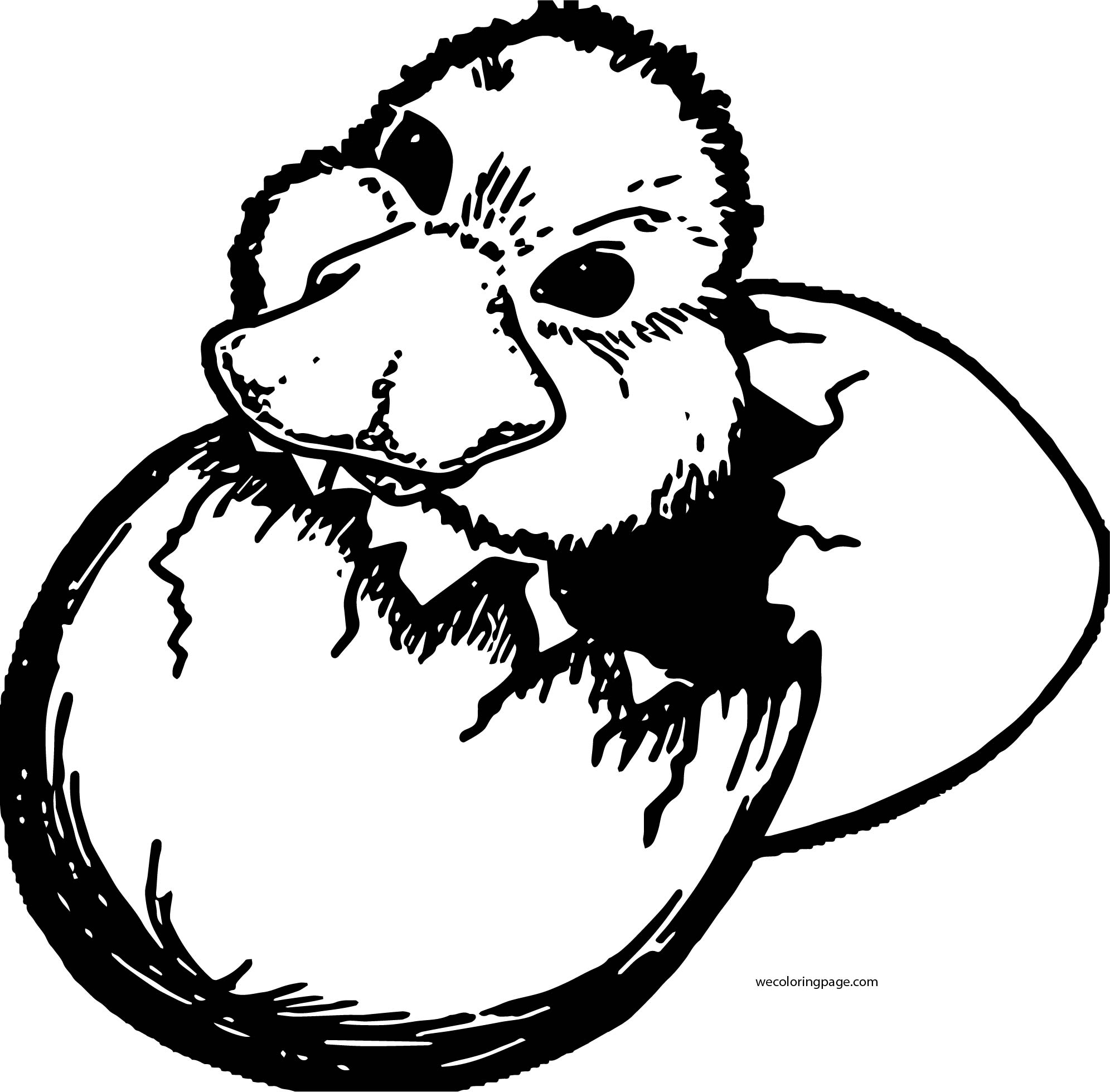 New Baby Duck Coloring Page