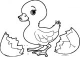 Small Baby Duck Broken Egg Coloring Page