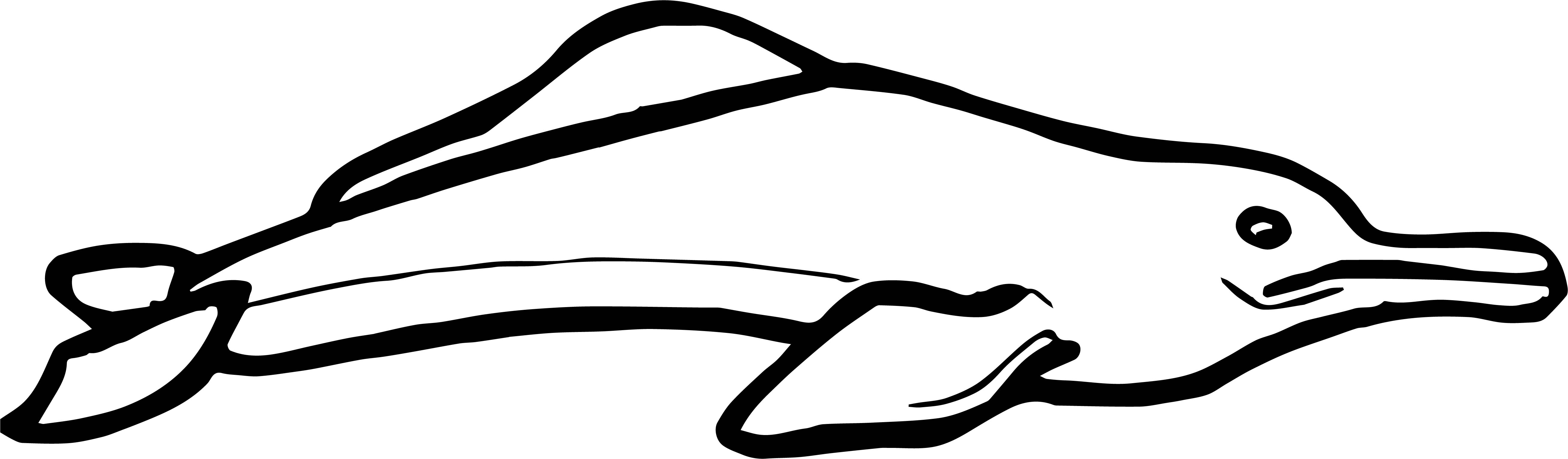 Dolphin Coloring Page 001