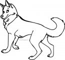 Husky 16 Coloring Page