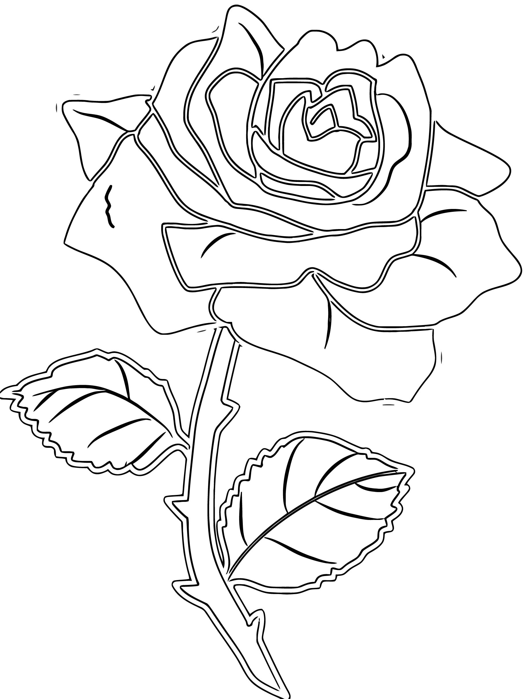 Knockout Rose Pic Clip Art Coloring Page