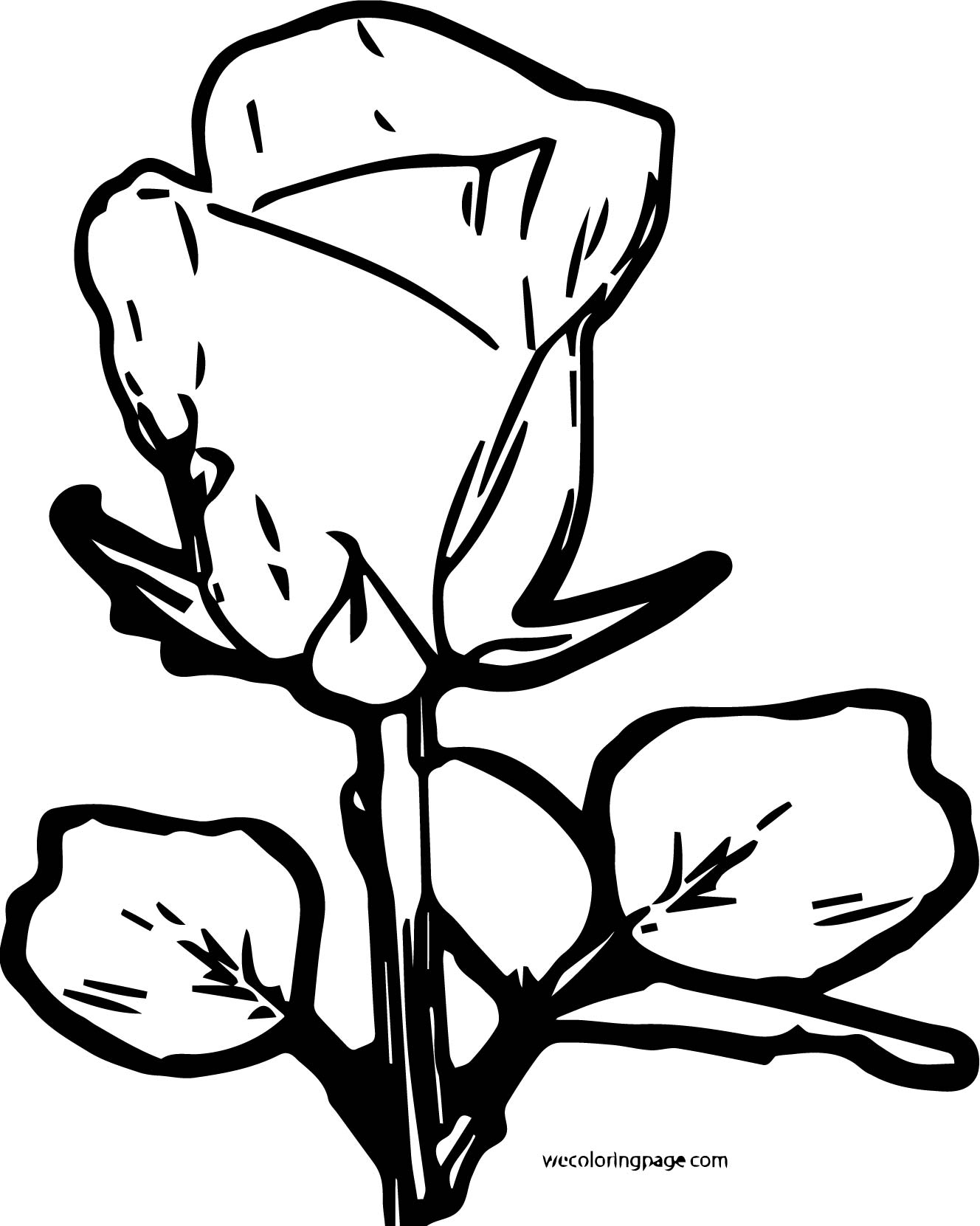 Rose Coloring Page 01